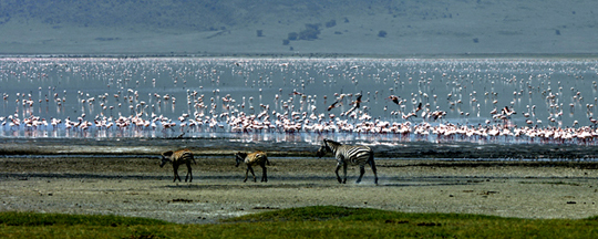 Flamingoes11Panorama.jpg